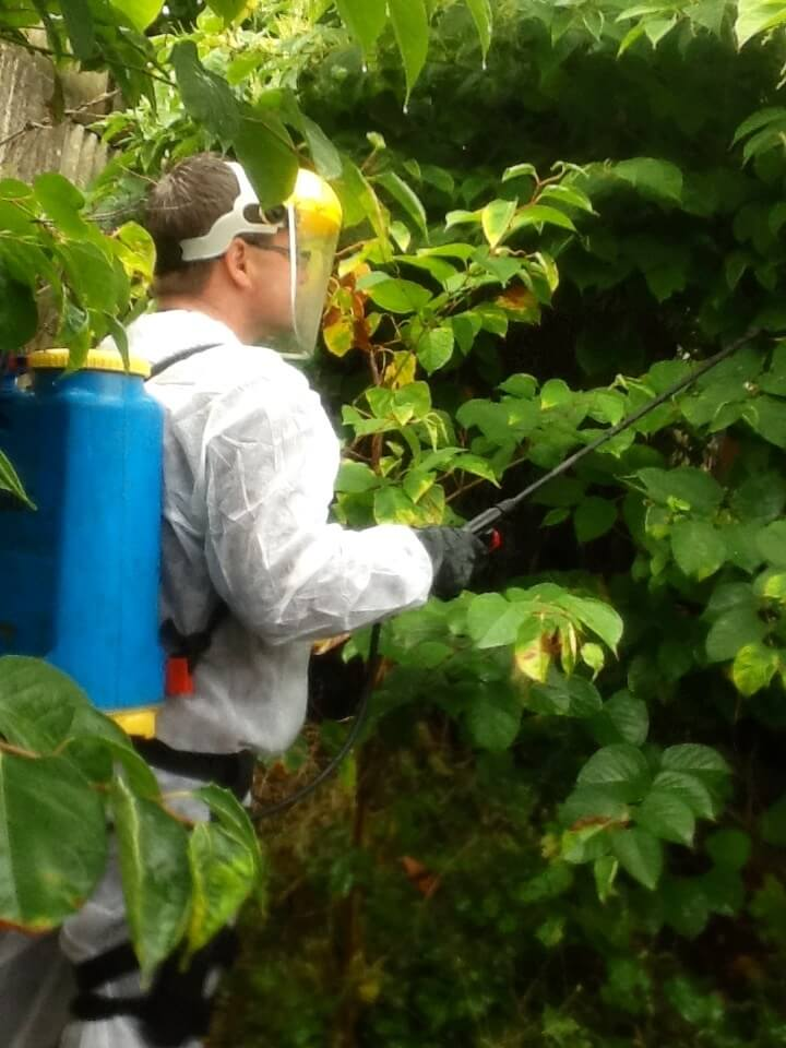 DIY Japanese knotweed Removal is not viable, professionals must complete the job