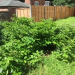 Japanese Knotweed in Warwickshire