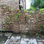 Japanese Knotweed Eradication in London