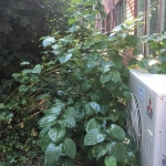 Japanese Knotweed Removal in Warrington