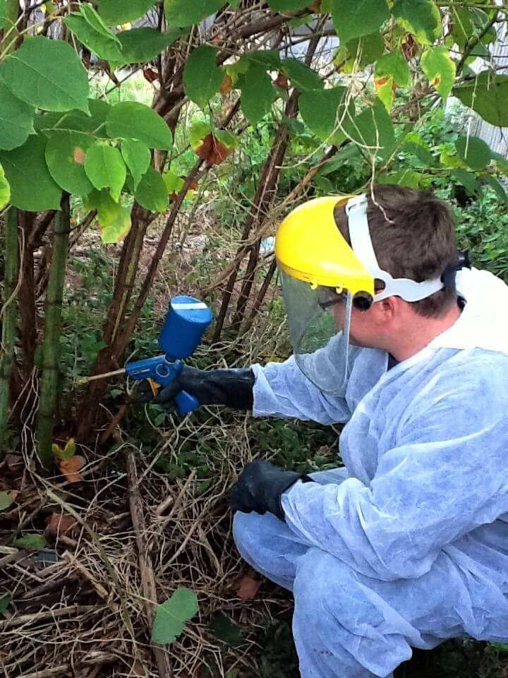 Injecting Japanese knotweed - Eradicating Japanese Knotweed in Cheshire