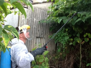 Herbicide Treatment - Eradicating Japanese knotweed in Cheshire