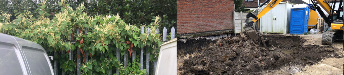 Commercial Japanese Knotweed Removal
