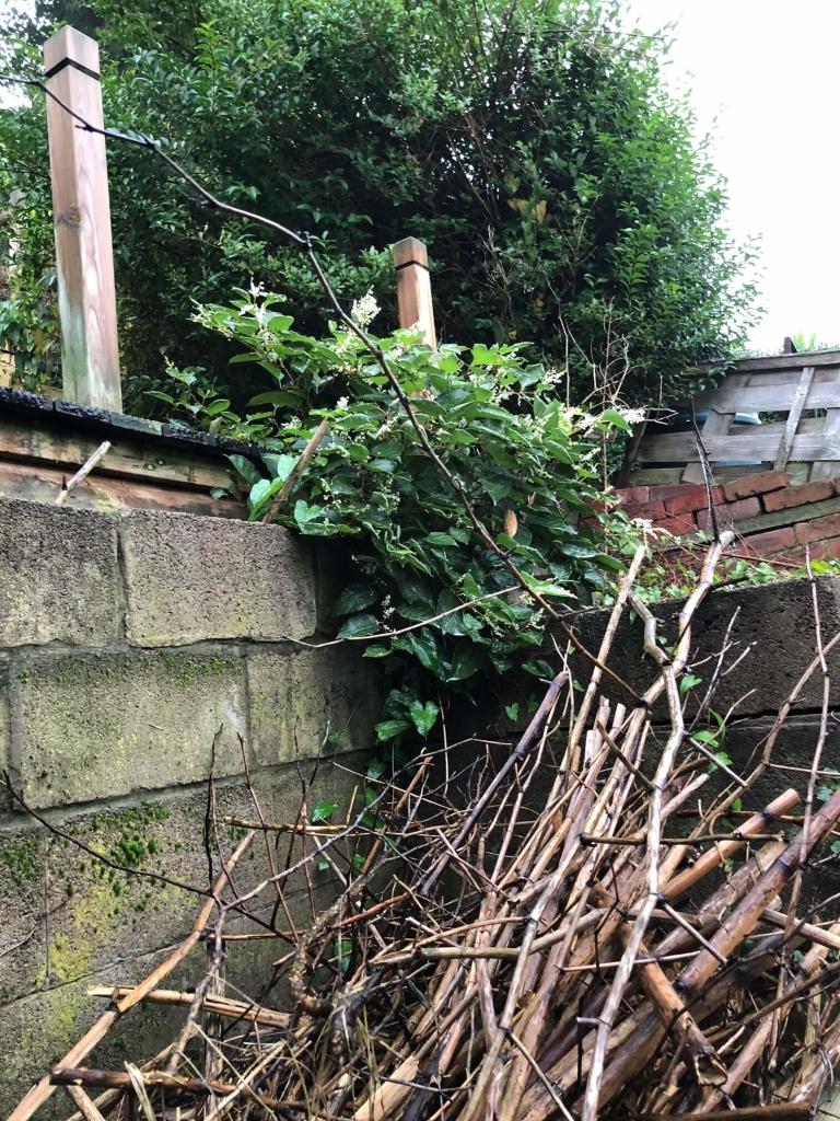 Eradication of Japanese Knotweed in Lutterworth