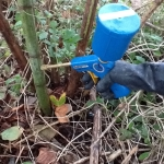Japanese Knotweed Removal in Craven Arms - Injecting Herbicide