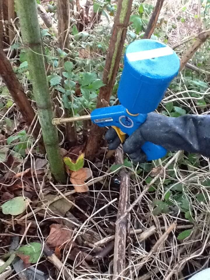 Japanese Knotweed Removal in Craven Arms