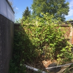 Removing Japanese Knotweed in Rowley Regis