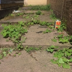 Japanese Knotweed Removal in Huyton - Growing through concrete