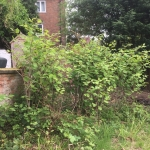 Eradication of Japanese Knotweed in Tipton