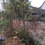 Japanese Knotweed Removal in Brierley Hill