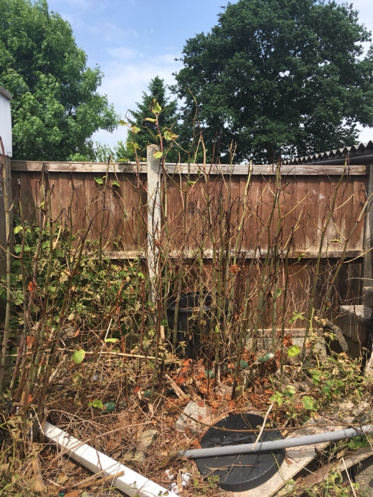 Japanese Knotweed Removal in Stourport-on-Severn