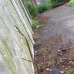 Japanese Knotweed Eradication in Irthlingborough
