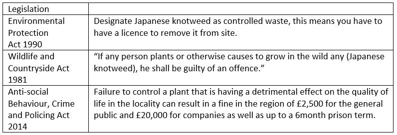 Japanese knotweed legislation