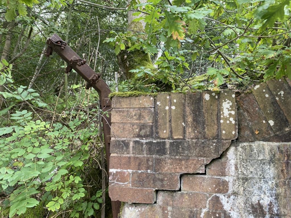 Japanese knotweed damage